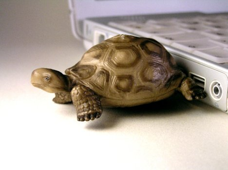 USB Flash Drive Turtle